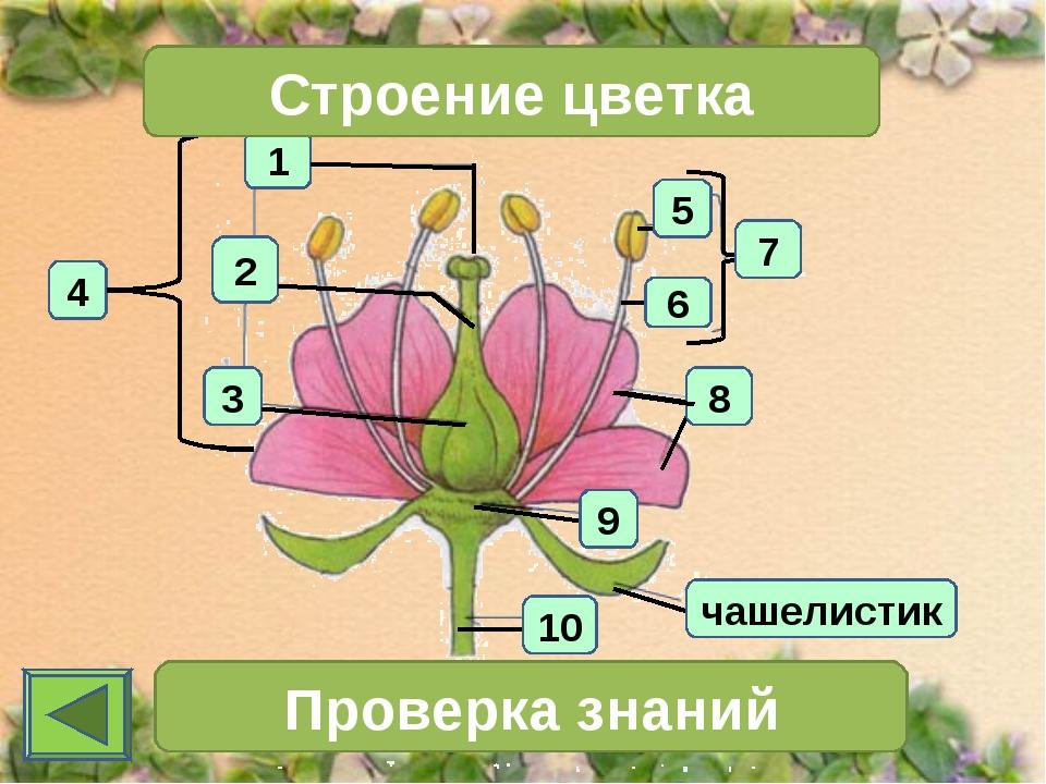 1 4 2 3 Строение цветка 7 Проверка знаний чашелистик 10 6 5 8 9