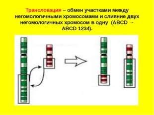Транслокация – обмен участками между негомологичными хромосомами и слияние д
