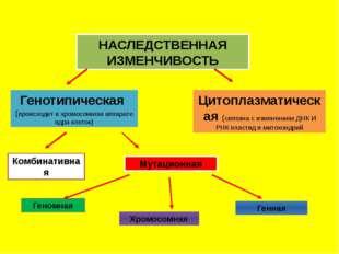 НАСЛЕДСТВЕННАЯ ИЗМЕНЧИВОСТЬ Генотипическая (происходит в хромосомном аппарате