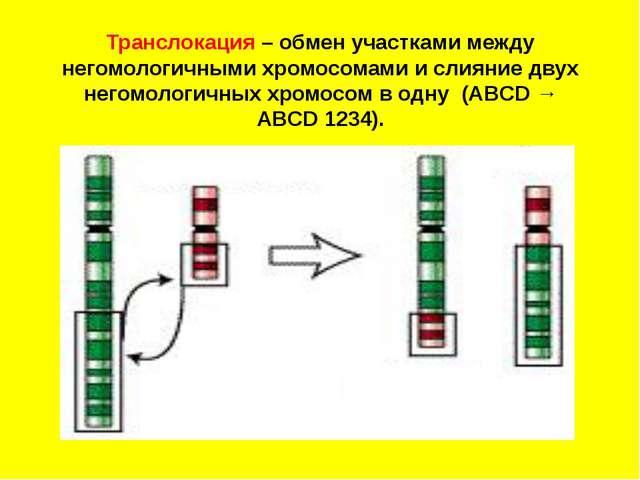 Транслокация – обмен участками между негомологичными хромосомами и слияние д...