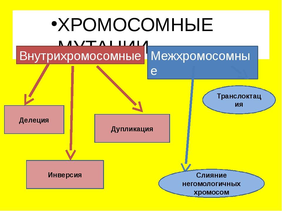 ХРОМОСОМНЫЕ МУТАЦИИ Внутрихромосомные Межхромосомные Делеция Инверсия Дуплика...