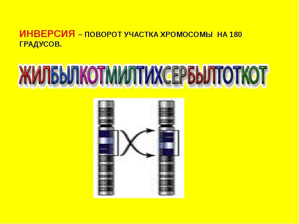 ИНВЕРСИЯ – ПОВОРОТ УЧАСТКА ХРОМОСОМЫ НА 180 ГРАДУСОВ.