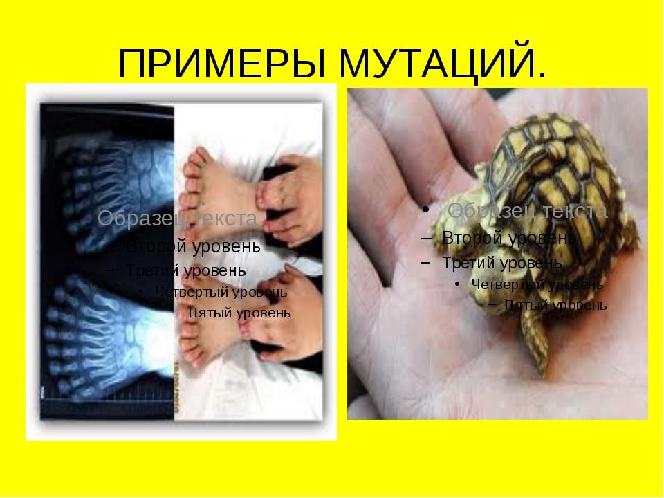 ПРИМЕРЫ МУТАЦИЙ.
