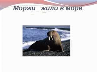 Моржи жили в море.