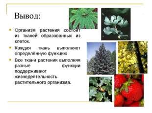 Вывод: Организм растения состоит из тканей образованных из клеток. Каждая тка