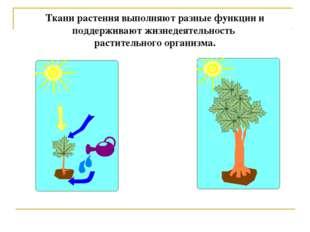 Ткани растения выполняют разные функции и поддерживают жизнедеятельность раст