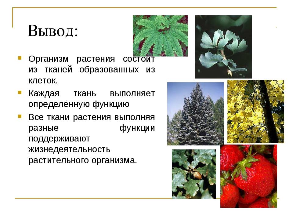 Вывод: Организм растения состоит из тканей образованных из клеток. Каждая тка...