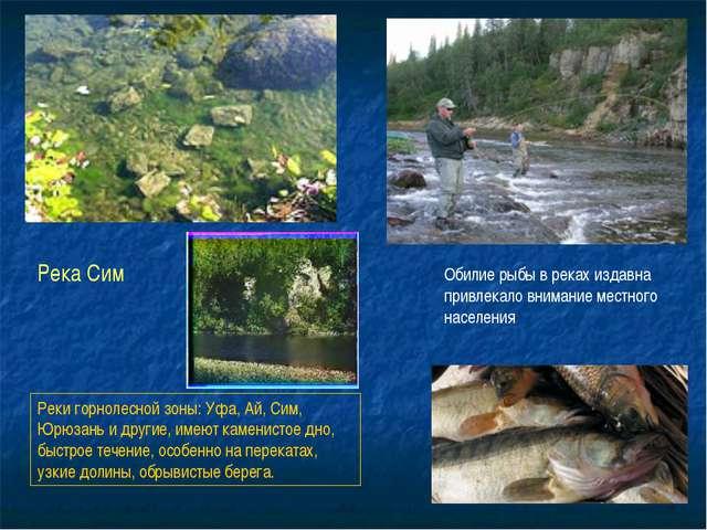 Реки горнолесной зоны: Уфа, Ай, Сим, Юрюзань и другие, имеют каменистое дно,...