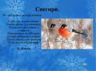 Снегири. На замёрзших ветках птички – Крохотули-невелички. Очень яркие, с рум