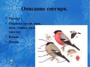 Описание снегиря. Размер ; Окраска груди, щек, шеи, спины, крыльев, хвоста; К
