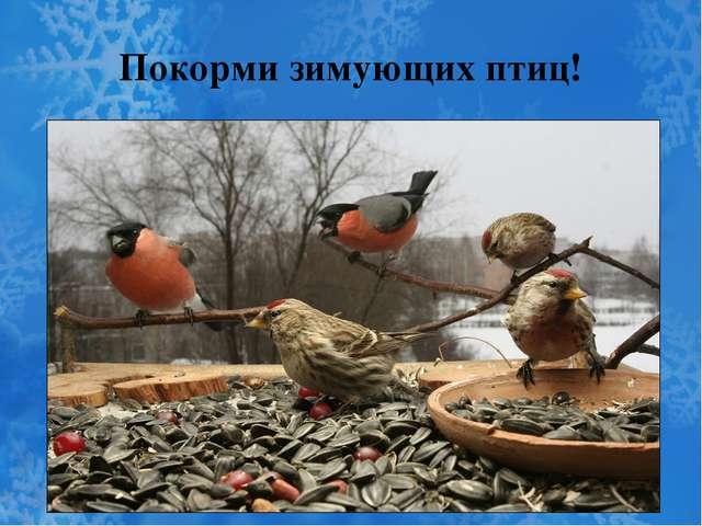 Покорми зимующих птиц!