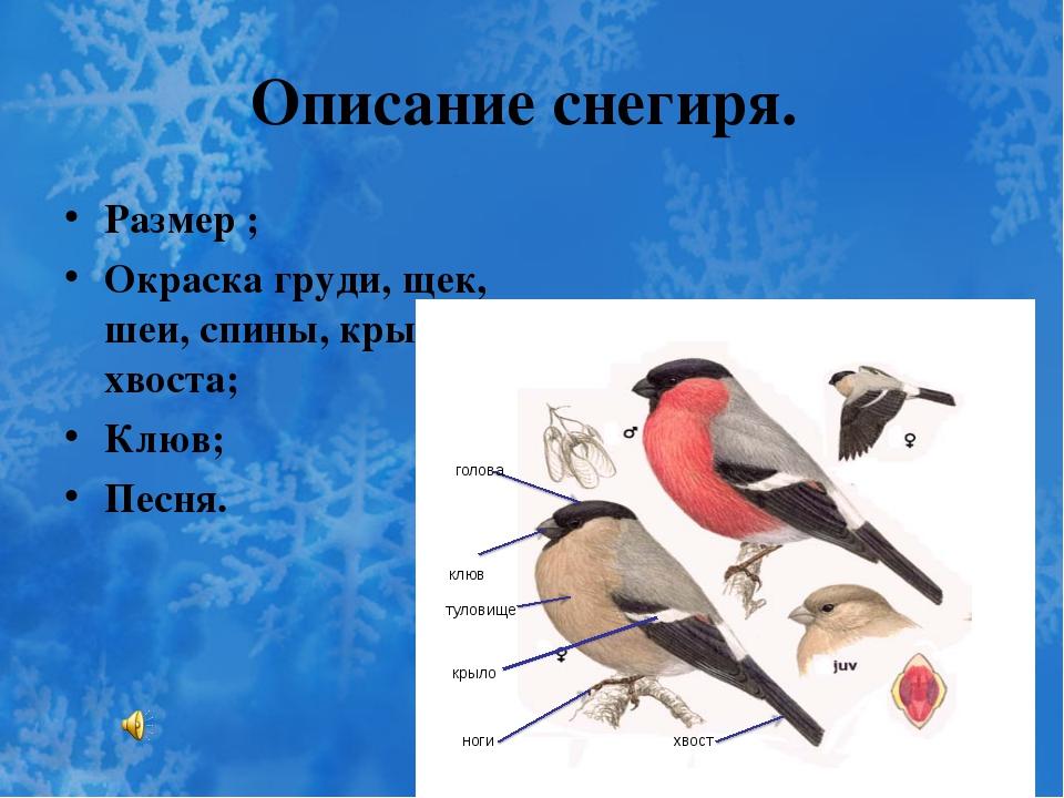 Описание снегиря. Размер ; Окраска груди, щек, шеи, спины, крыльев, хвоста; К...