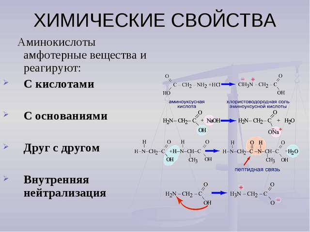 ХИМИЧЕСКИЕ СВОЙСТВА Аминокислоты амфотерные вещества и реагируют: С кислотами...