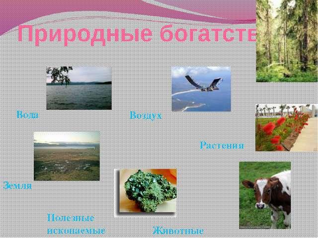 Природные богатства Воздух Вода Земля Полезные ископаемые Животные Растения