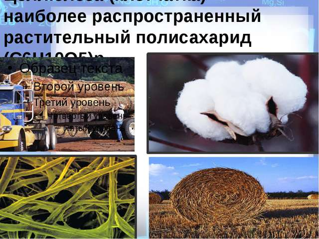 Целлюлоза (клетчатка) - наиболее распространенный растительный полисахарид (C...