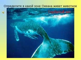 Определите в какой зоне Океана живет животное Горбатый кит