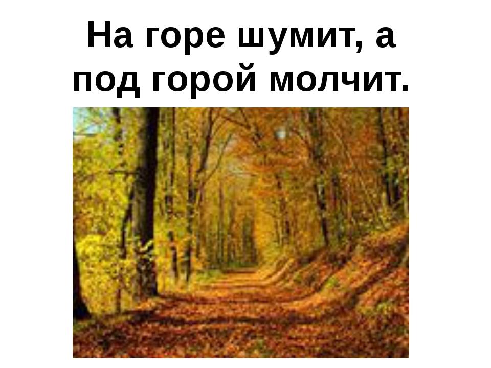 На горе шумит, а под горой молчит.