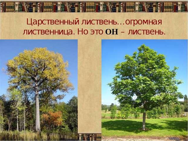 Царственный листвень…огромная лиственница. Но это ОН – листвень.