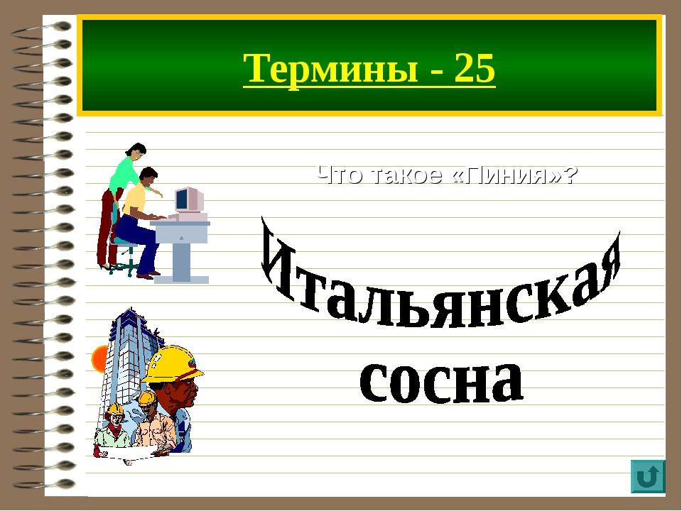 Термины - 25 Что такое «Пиния»?