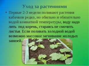 Уход за растениями Первые 2-3 недели поливают растения кабачков редко, но оби