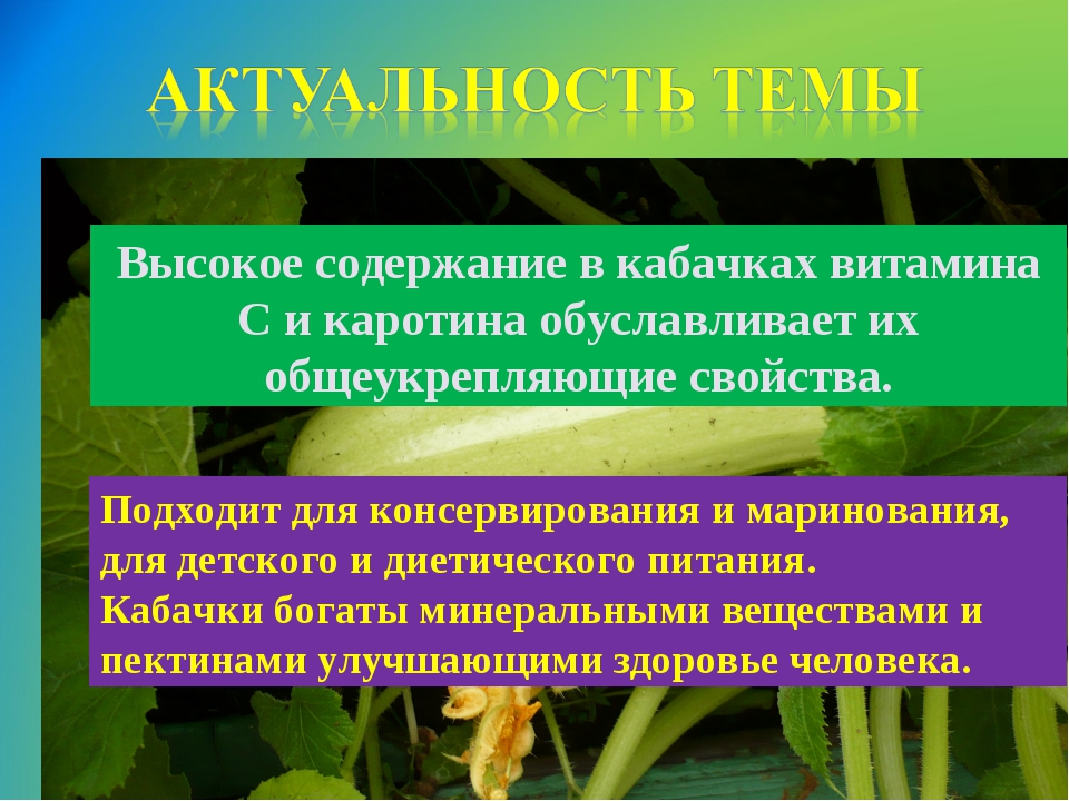 Высокое содержание в кабачках витамина С и каротина обуславливает их общеукре...