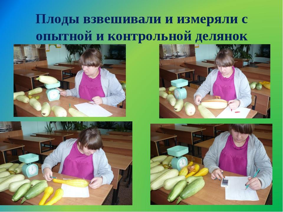 Плоды взвешивали и измеряли с опытной и контрольной делянок