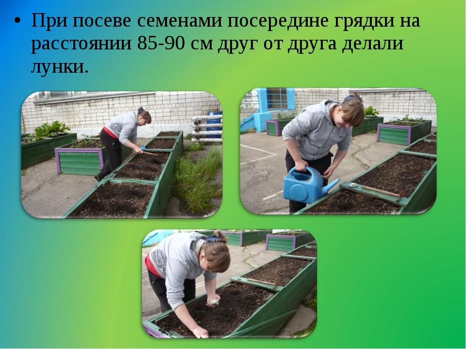 При посеве семенами посередине грядки на расстоянии 85-90 см друг от друга де...
