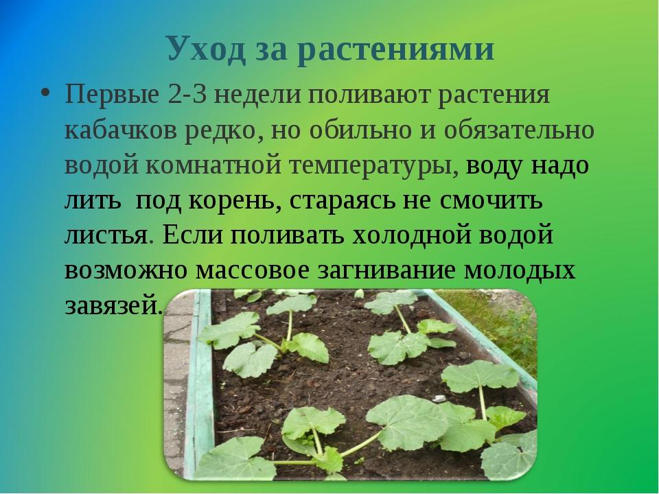 Уход за растениями Первые 2-3 недели поливают растения кабачков редко, но оби...