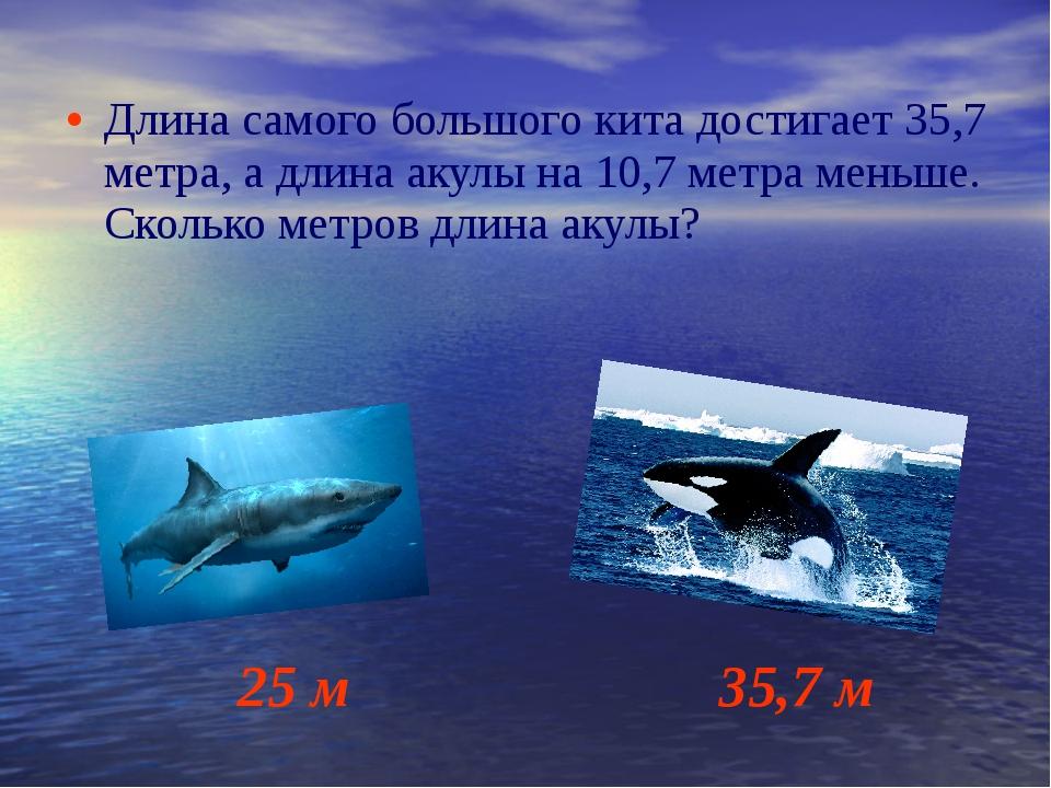 Длина самого большого кита достигает 35,7 метра, а длина акулы на 10,7 метра...