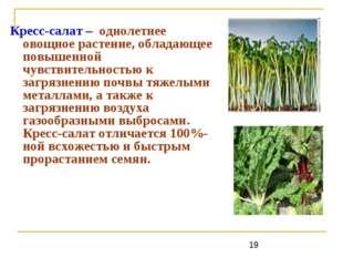 Кресс-салат – однолетнее овощное растение, обладающее повышенной чувствительн