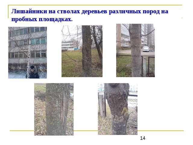Лишайники на стволах деревьев различных пород на пробных площадках.