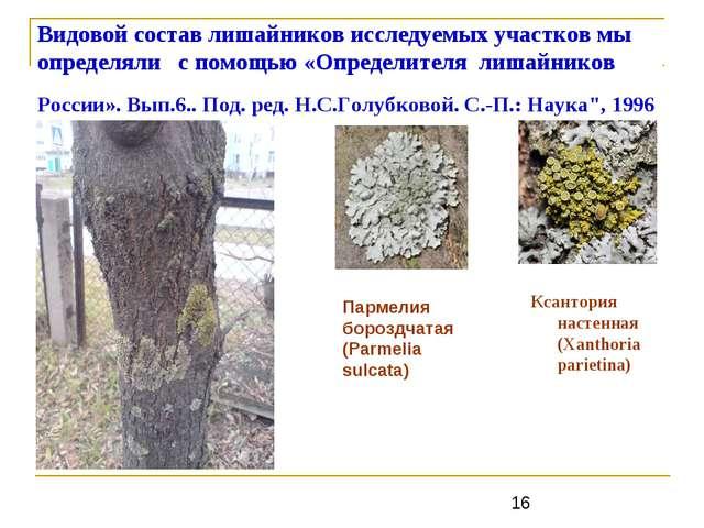 Видовой состав лишайников исследуемых участков мы определяли с помощью «Опред...