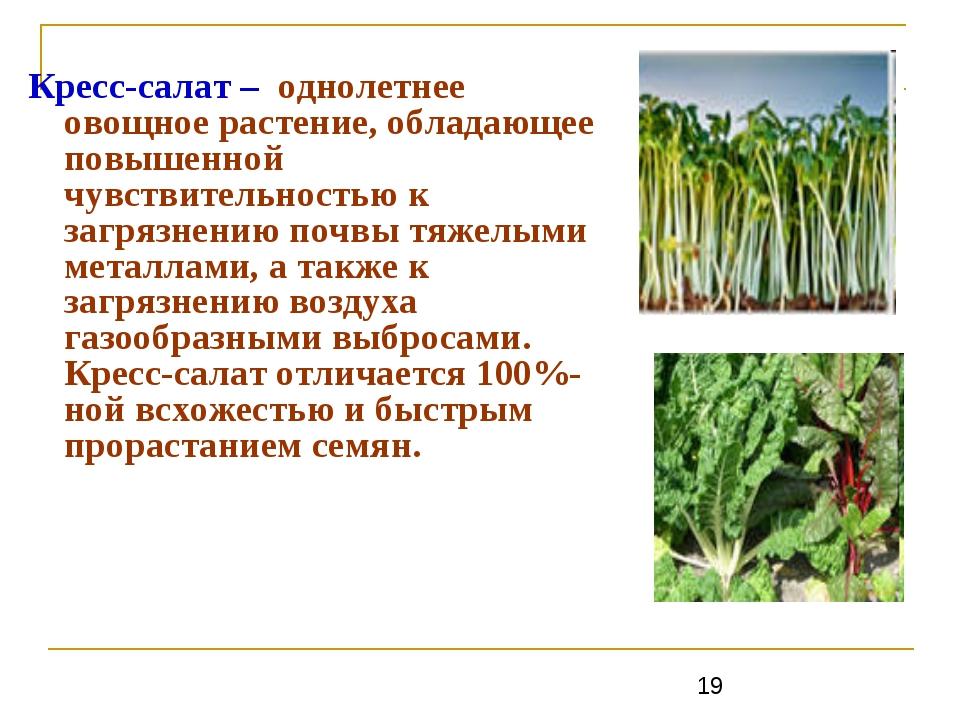 Кресс-салат – однолетнее овощное растение, обладающее повышенной чувствительн...