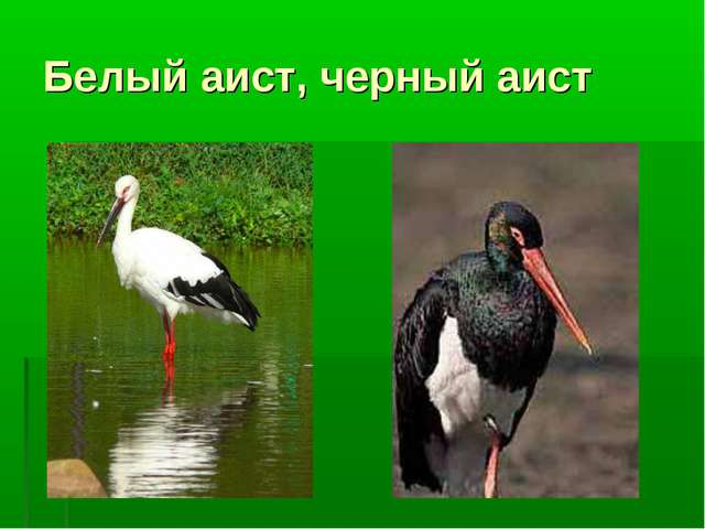 Белый аист, черный аист