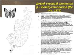 Дикийтутовыйшелкопряд–Bombyxmandarina(Moore, 1872) текст слайда Отряд Че