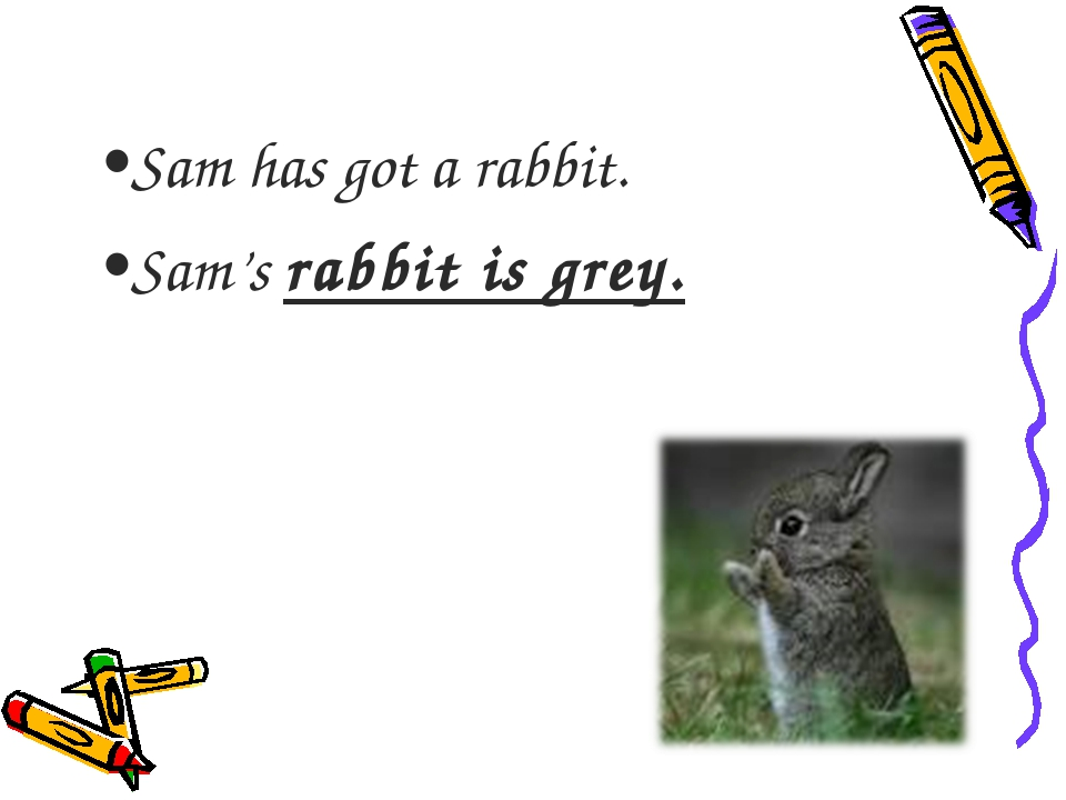 Sam has got a rabbit. Sam's rabbit is grey.