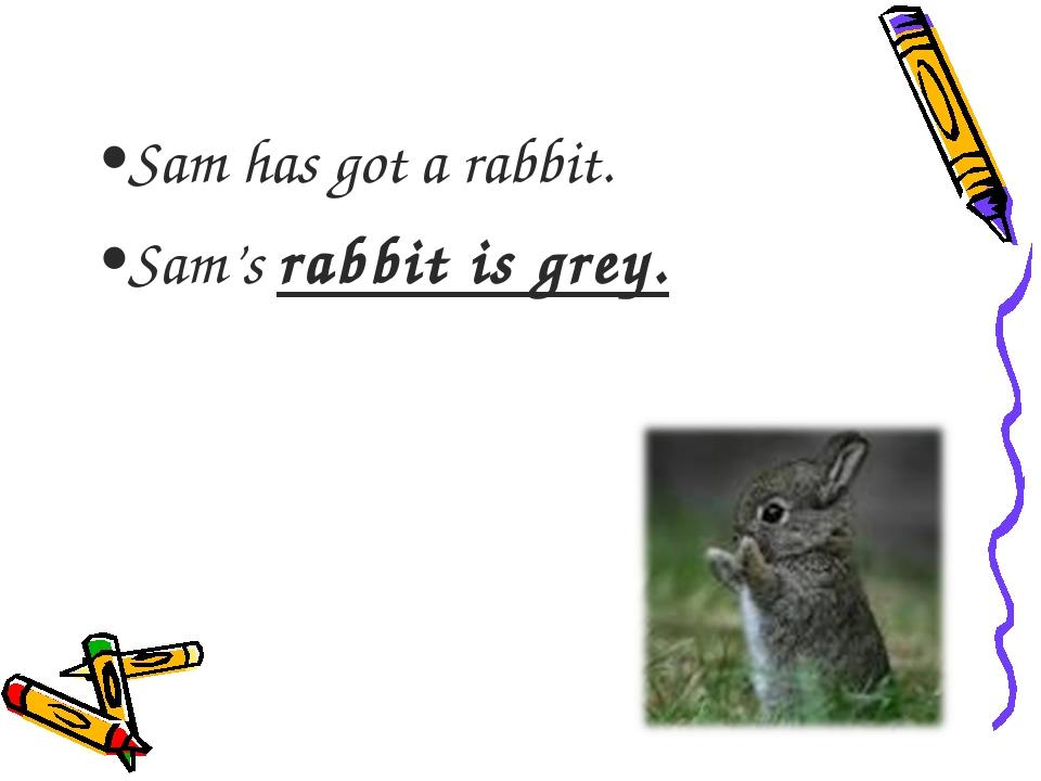 Sam has got a rabbit. Sam's rabbit is grey.