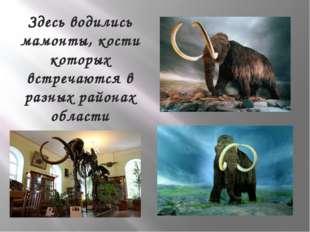 Здесь водились мамонты, кости которых встречаются в разных районах области