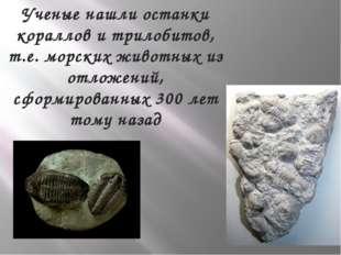Ученые нашли останки кораллов и трилобитов, т.е. морских животных из отложени