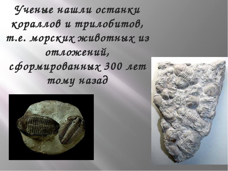 Ученые нашли останки кораллов и трилобитов, т.е. морских животных из отложени...