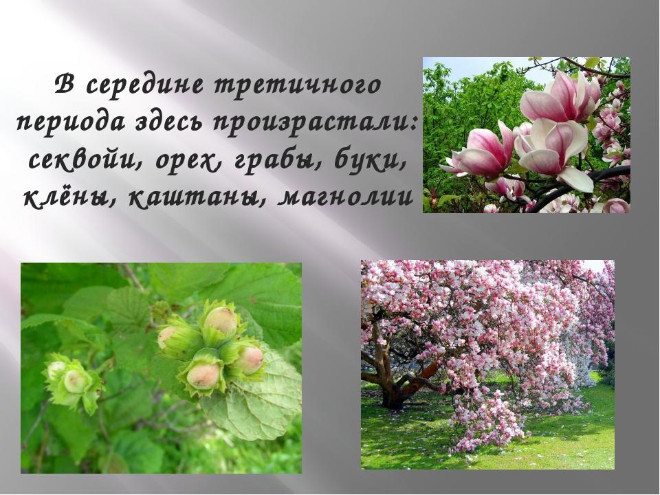 В середине третичного периода здесь произрастали: секвойи, орех, грабы, буки,...