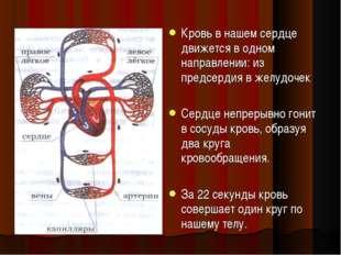 Кровь в нашем сердце движется в одном направлении: из предсердия в желудочек