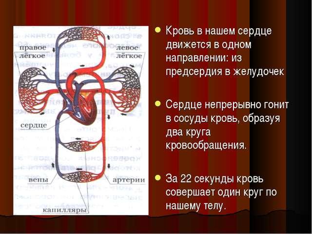 Кровь в нашем сердце движется в одном направлении: из предсердия в желудочек...