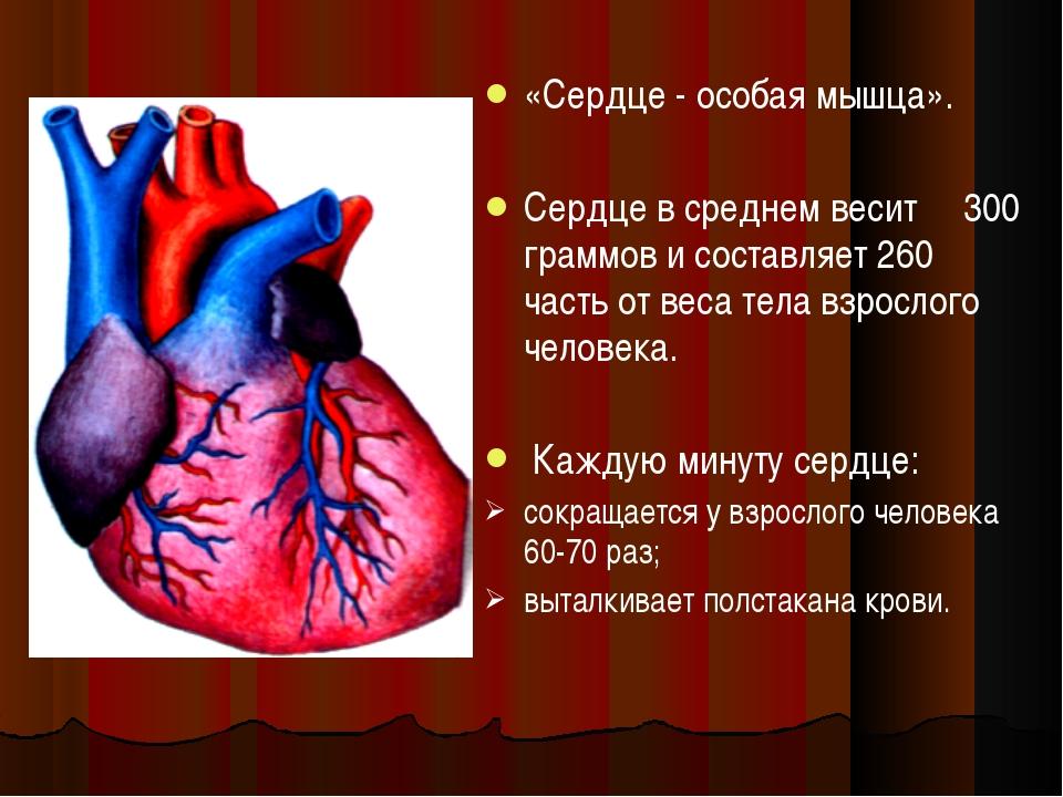 «Сердце - особая мышца». Сердце в среднем весит 300 граммов и составляет 260...