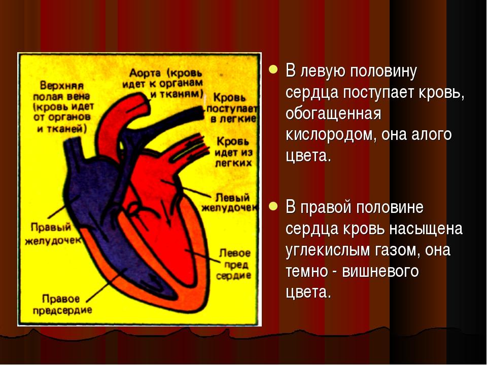 В левую половину сердца поступает кровь, обогащенная кислородом, она алого цв...