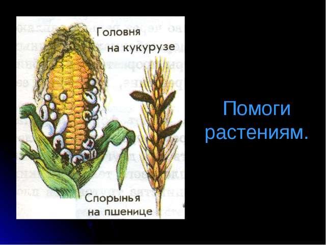 Помоги растениям.