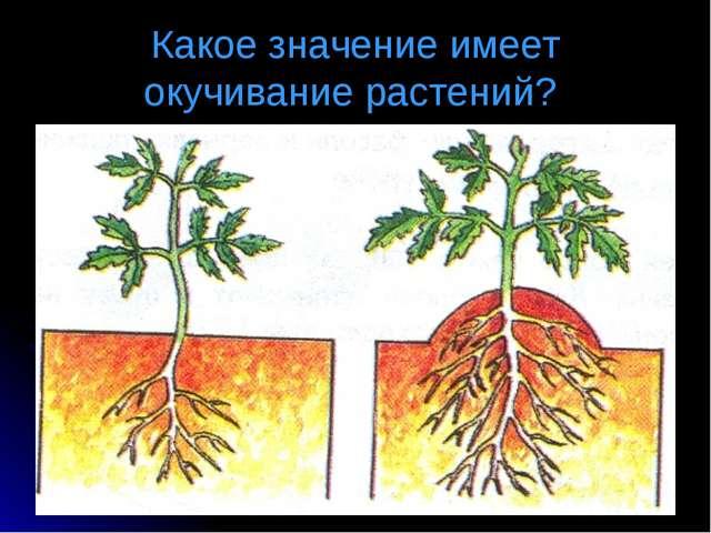 Какое значение имеет окучивание растений?