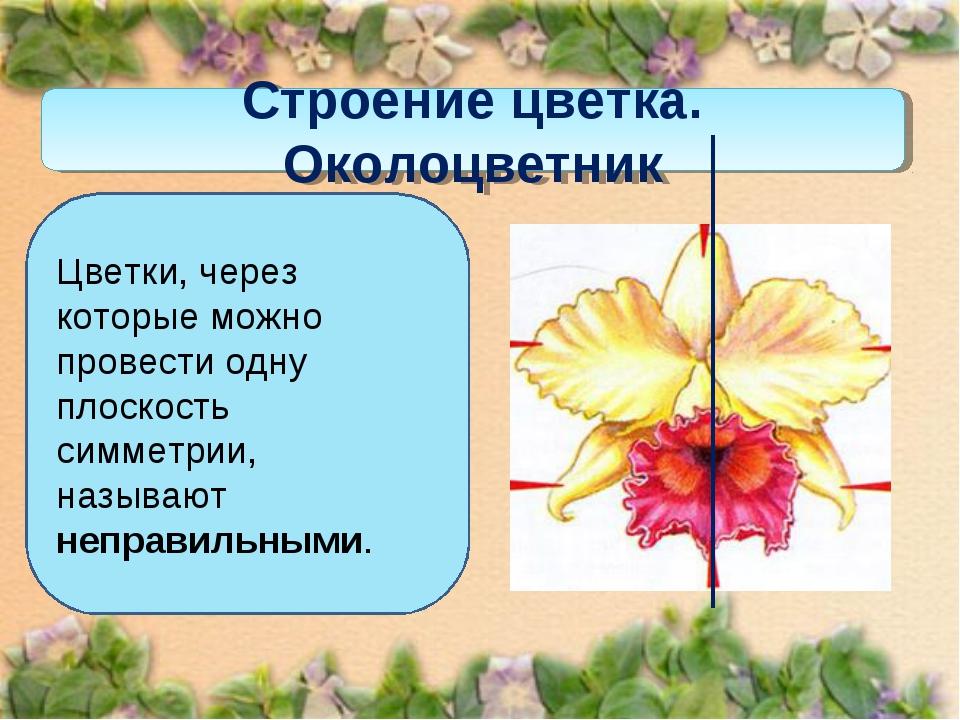 Строение цветка. Околоцветник Цветки, через которые можно провести одну плоск...