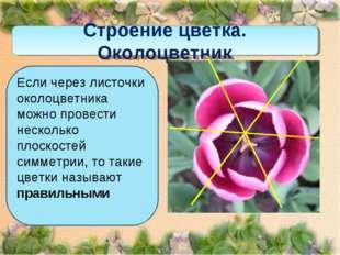 Строение цветка. Околоцветник Если через листочки околоцветника можно провест