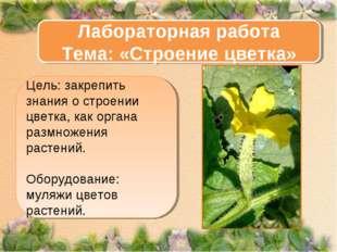 Цель: закрепить знания о строении цветка, как органа размножения растений. Об